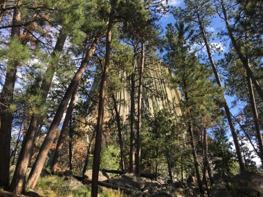 forests around Devils Tower