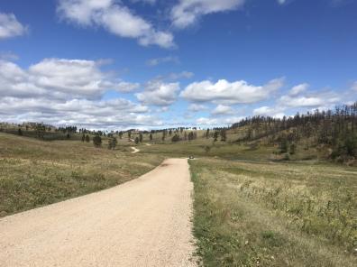 Wildlife Loop at Custer State Park