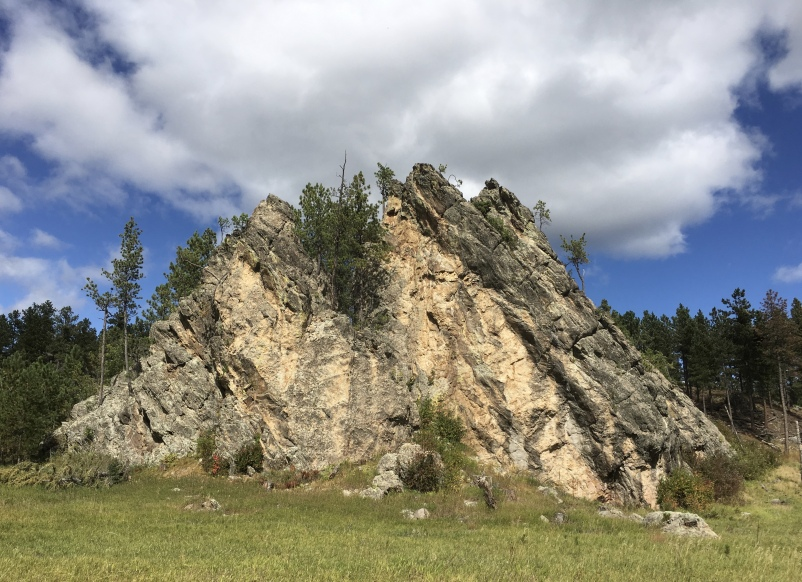 Wildlife Loop at Custer State Park