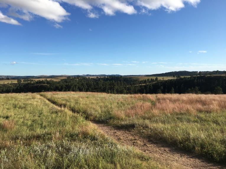 Custer Wildlife Loop