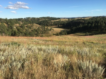 Custer Wildlife Loop