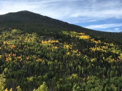 Colorful trees at Rocky Mountain National Park
