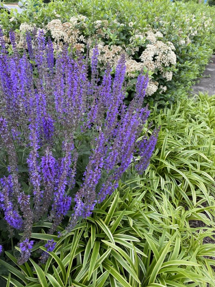 pretty in lavender