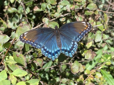 butterfly at Lake Anne