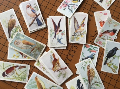 Bird cigarette cards of my sister's