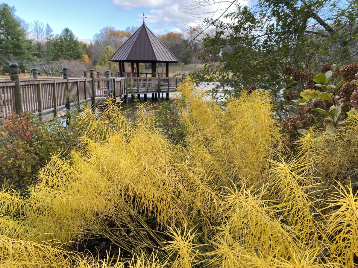 Meadowlark Botanical Gardens, Vienna, VA