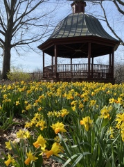 a walk around Meadowlark Gardens on 3/16