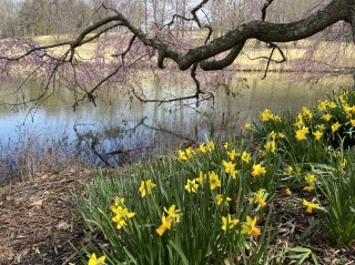 a walk around Meadowlark Gardens on 3/16