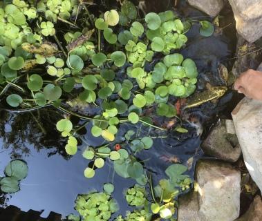 Steph's pond