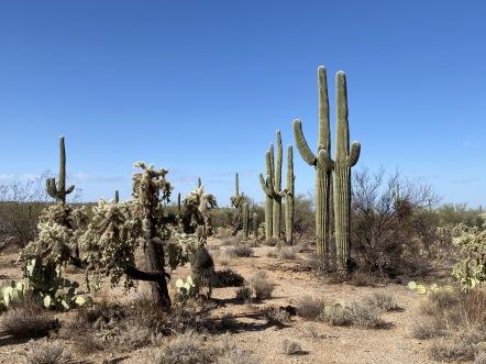 Saguaro National Park East, Tucson, AZ