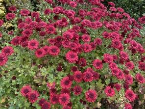 flowers in Reston